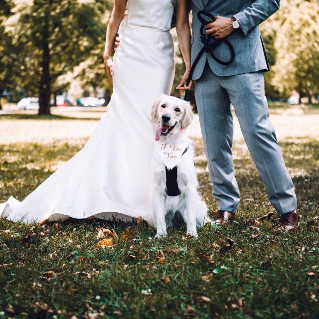 ¿Qué hacer con tus mascotas antes, durante y después de la boda?
